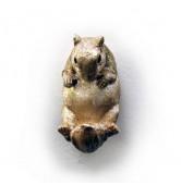 Haken Eichhörnchen